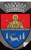 Web design Primaria Municipiului Bacau